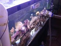 I have a 55 gallon reef setup for sale with the