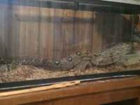 I have a 4ft. 55 gallon aquarium, 5ft Red Tail Boa. and