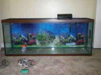 I Have 55 Gallon Fish Tank For sale it is very nice.