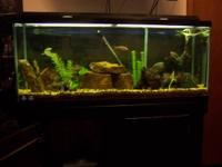I am selling my 55 Gallon Fish Aquarium / Tank, Stand,