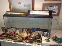 55 gallon fish tank in PRIME condition, no