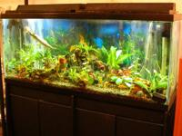 HELLO, FOR SALE IS A 55 GALLON TANK, BLACK STAND WITH