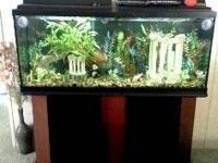 55 gallon fish tank and stand. Tank comes with