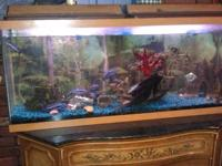 I have a established 55 gallon fish tank, about 60 lbs