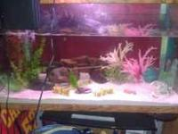I have a 55 gallon freshwater tank that comes with