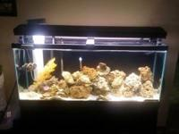 Fully established 55 gal saltwater aquarium. Comes with