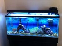 55 gallon aquarium and stand. Aquatic life t5-ho