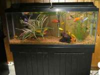 . 55 Gallon tank and stand.. Lights, Filter, heater ,