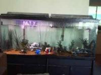 Humongous 55 gallon fish tank for just $150, will take