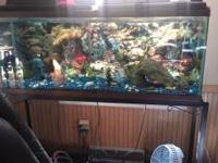 55 gallon tank with a black metal stand. All pumps,