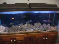 55Gallon Fish tank with stand Includes: 55Gallon tank