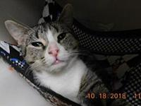 56545 Bianca's story We welcome you to our shelter to