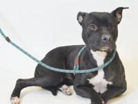 56644A Tootsie's story Tootsie is a sweet girl who