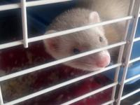 I have 5 Ferrets i am trying to rehome. 3 females and 2