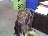 I have a 6 month old American Bully Female. She has had