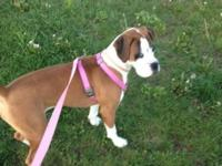 I am wanting to re-home my female boxer puppy. She is a