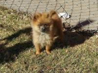 I have 2 female Pomeranians that I need to rehome! They