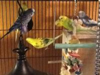 I have 6 parakeets and a large aviary. There are 3
