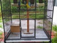 i have 6 parakeets. 3 boys and 3 girls. they come with