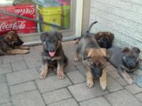 This beautiful litter I co own with a friend of mine. I