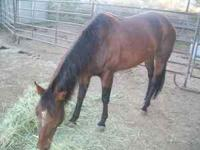 6yr old bay mare. Great temperament and willing