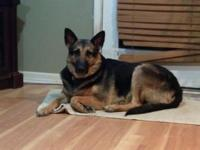 I have a 6 year old female spayed GSD. Her shots are