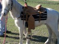 Harley is a 6 year old gelding, he is a palomino with a