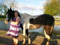 black and white paint horse needs to go,no longer have