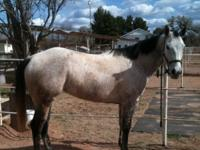 Nice mare with 85% Foundation bloodlines. Gentle, easy
