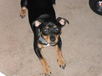 We have a 6 yr old Min Pin that is in need of a new