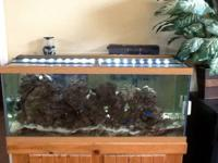 For sale and priced to move quick. 65 gallon fish tank