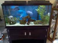 THIS IS A VERY NICE SHOW FISH TANK. IT HAS A BLACK
