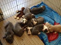 Available 10/15...5 females, 2 males...re-homing fee of