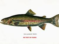 This is a fine Contemporary print of a Rainbow Trout.