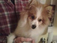 I have to rehome a 7 month old pomeranian I just took