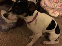 Have a 7 month old terrier mix that we are needing to