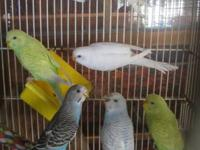 ** BUY ALL 7 BIRDS AND GET ONE FREE...NORMALLY $10.00 A