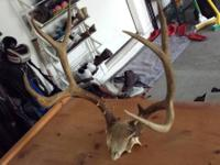 For sale is a 7 point buck antler rack , this would
