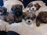 3 Males and 2 females left. Taking deposits now. Ready
