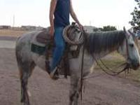 7 year old ranch broke gray gelding. Has been roped off