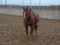 7 year old gelding selling as grade; Papers seem to
