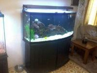 FOR SALE 72 gallon bow front very nice an expensive