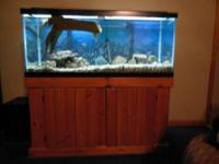 75 gallon all glass aquarium with stand, lighted hood,