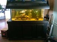 75 aquarium on solid wood stand. Stand is for 180
