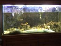 75 gallon saltwater fish aquarium. Wooden stand and
