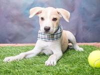 777's story Next Adoption Event: Saturday, September