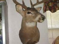 This is a nice 8 point mounted deer head in excellent