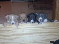 I have 4 male pups left, they are up to date on shots,