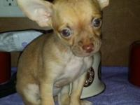 I have 3 chihuahua puppies for sale 1 female 2 males. I