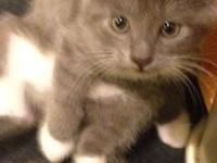 8 week old kittens, males and females, very playful and